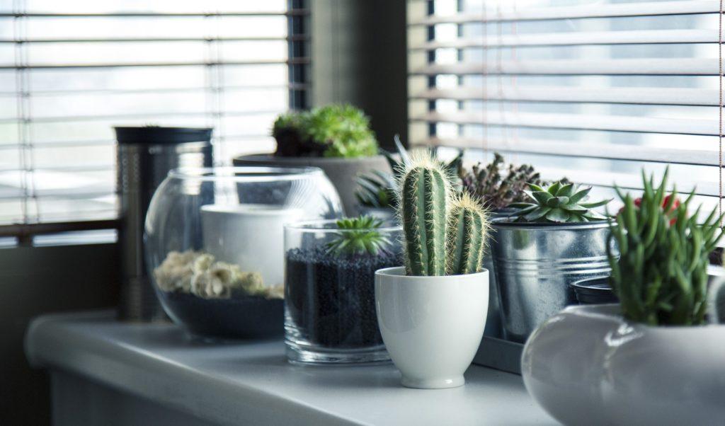 Planter i indretningen - CeeDesign